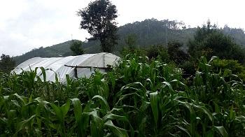 San_Cristobal_-_planting_trees_farm_2.jpg