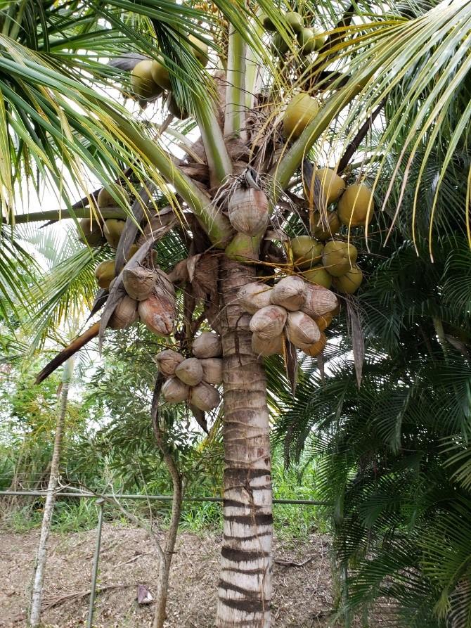 palm_tree_raul_santiago.jpg