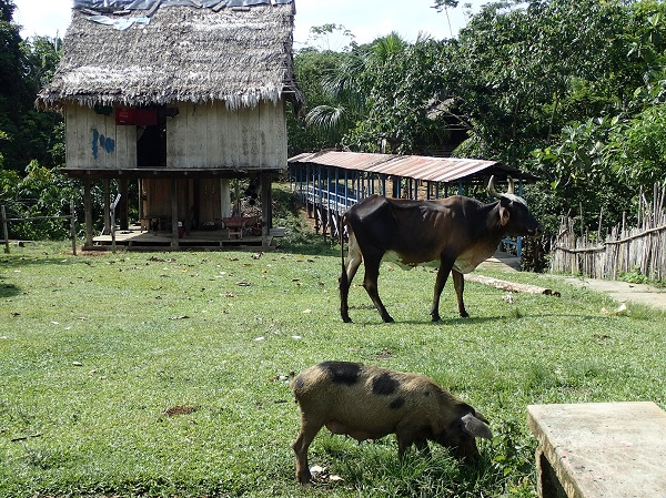 Kabat_-_cow.JPG