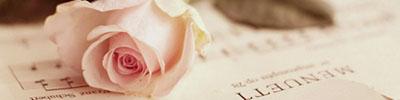 Pink_Rose_and_Music_Strip.jpg