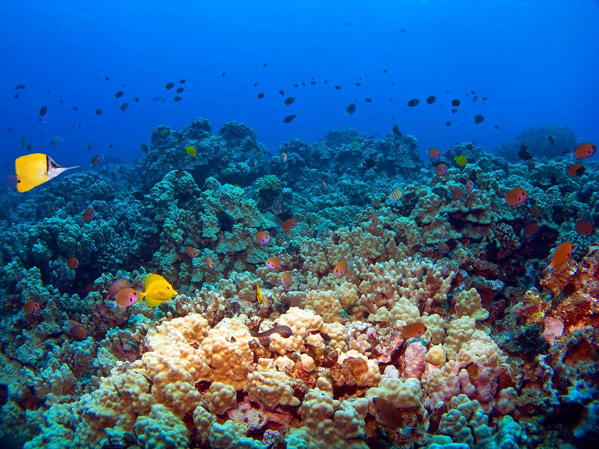 coral-reefs-ban-toxic-sunscreen.jpg