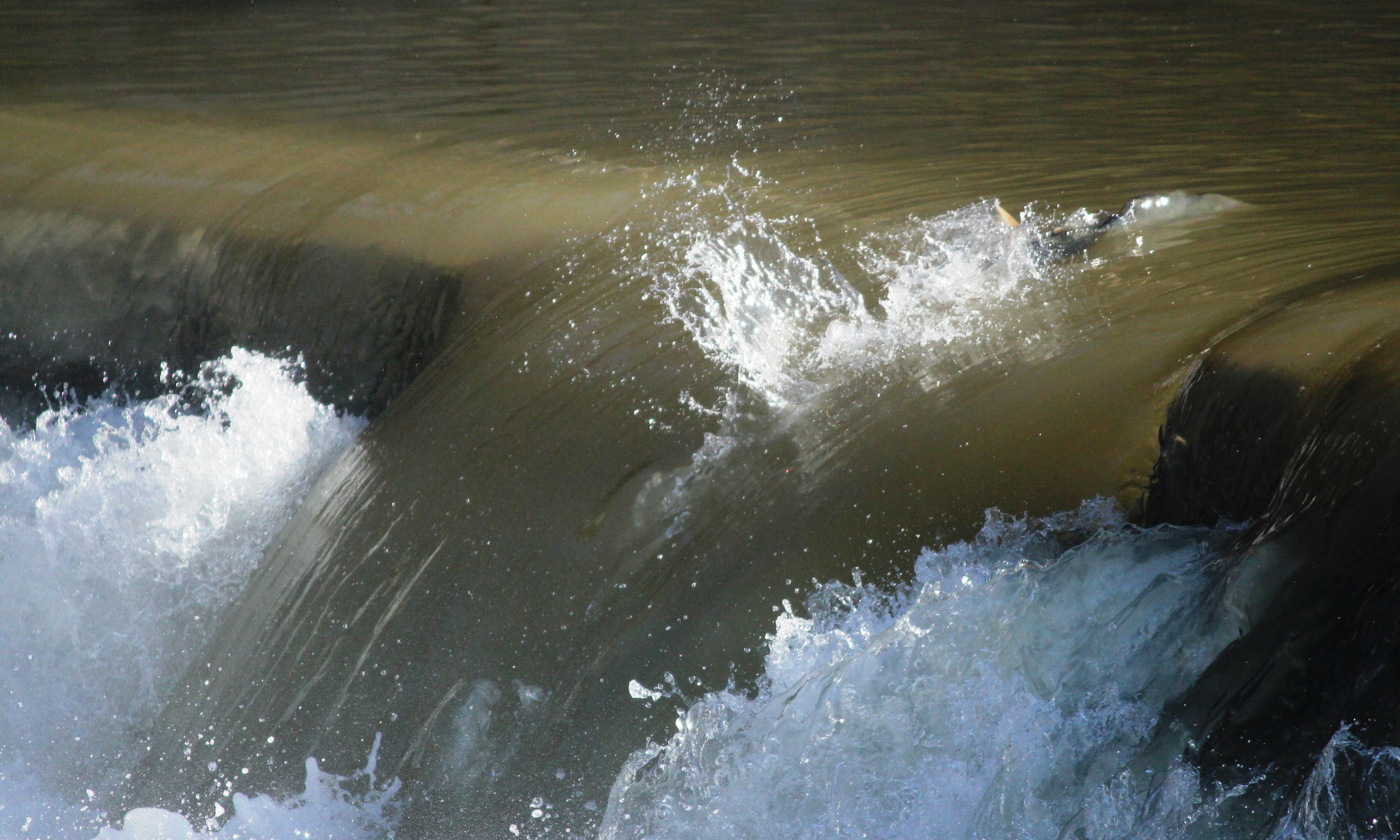 Photograph: A successful trout.