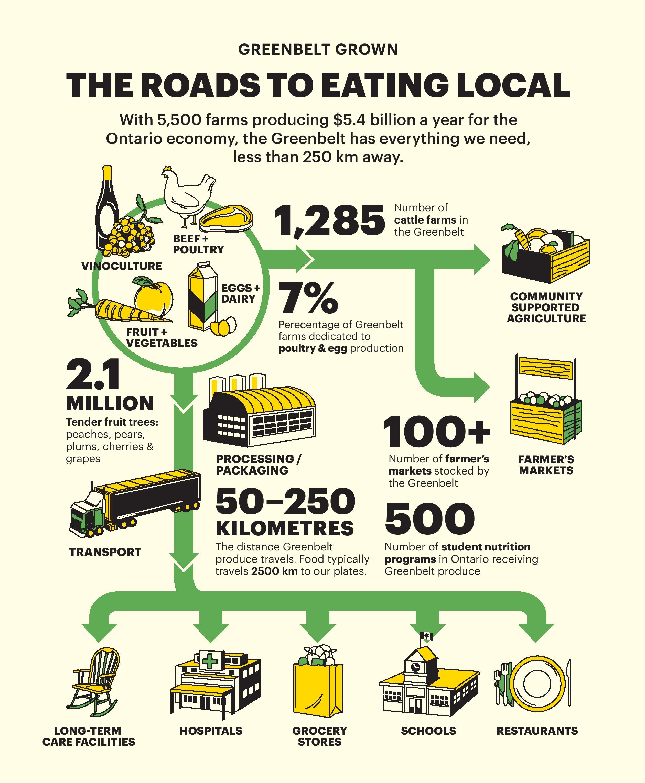 Food Infograph