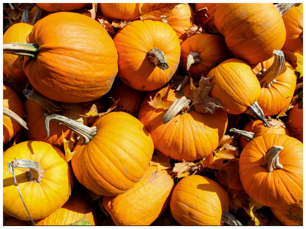 Pumpkins_Fall.png