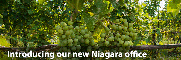 Niagara Vines Text overlay - Our New Niagara Office