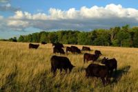 Keeping Greenbelt Farmland in Farming