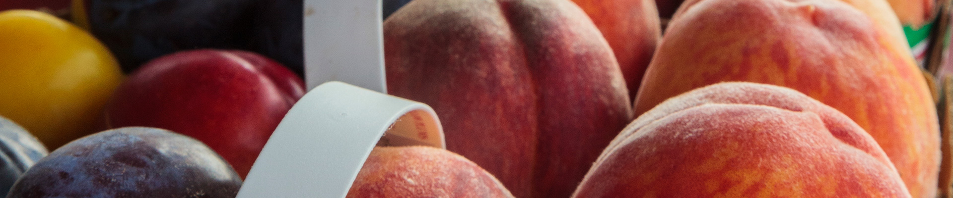 Photo-Peaches-2014-08-07-VQ-Grand-Tour-Niagara-037.jpg