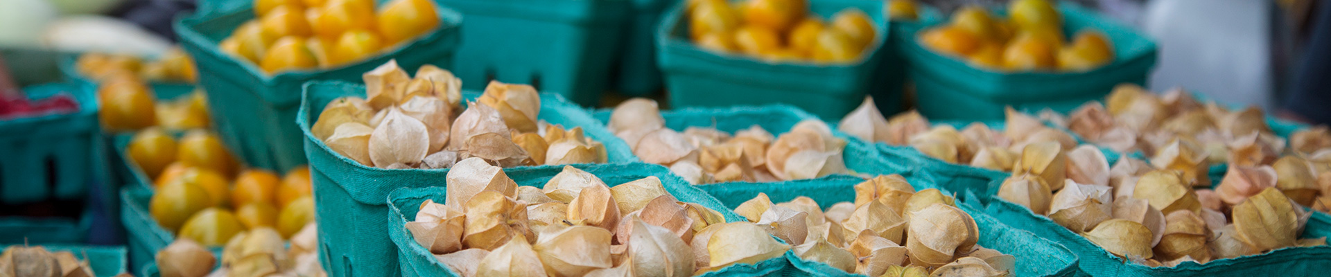 Photo-Ground-Cherries-2014-08-23-Greenbelt-Harvest-Picnic-2014-203.jpg