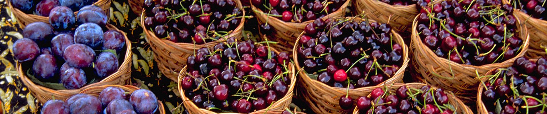 Photo-Plums-Cherries-Ontario.jpg