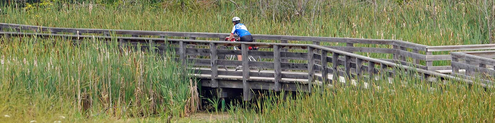 Photo-Cyclist-NokiidaTrail-Wetland-2015-08-18-Great-Waterfront-Trail-Adventure-2015-Greenbelt-Route-Special-Edition_c_Simon-Wilson-237.jpg