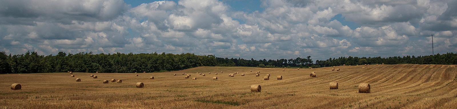 Image_4_Ganaraska-Northumberland-Forest-021.jpg