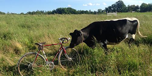 Bike-Icon-2.jpg