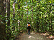 Photo - Cyclist in forest