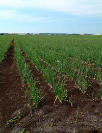 Holland Marsh Greenbelt Sustainability Program