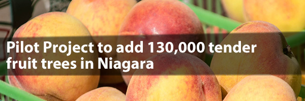 Photo – Pilot Project to add 130,000 fruit trees in Niagara!