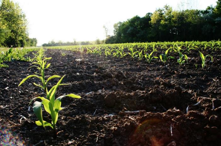 Soil_OntFarmlandTrust.png