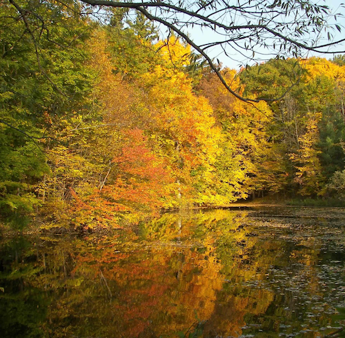 lake_autumn_trees_dundas_v.png