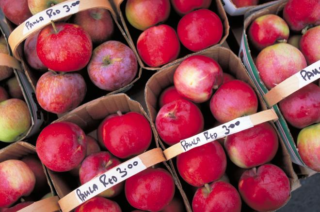 apples_-_ontario.png