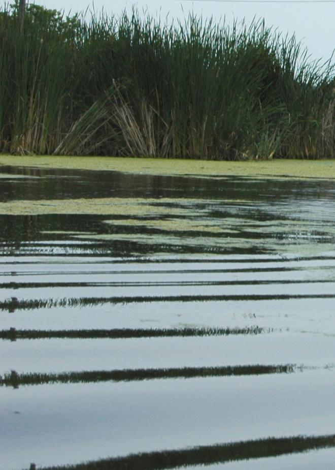 lake_simcoe_-_marsh_water_ripples.jpg