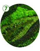 GI_Green_wall.jpg