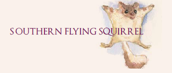 2010-11-12_southern_flying_squirrel_0.png