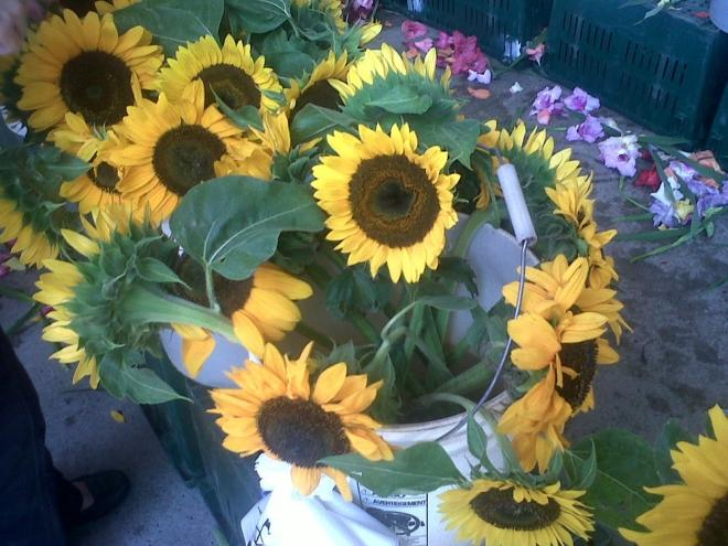 2010-09-08_sunflowers.jpg