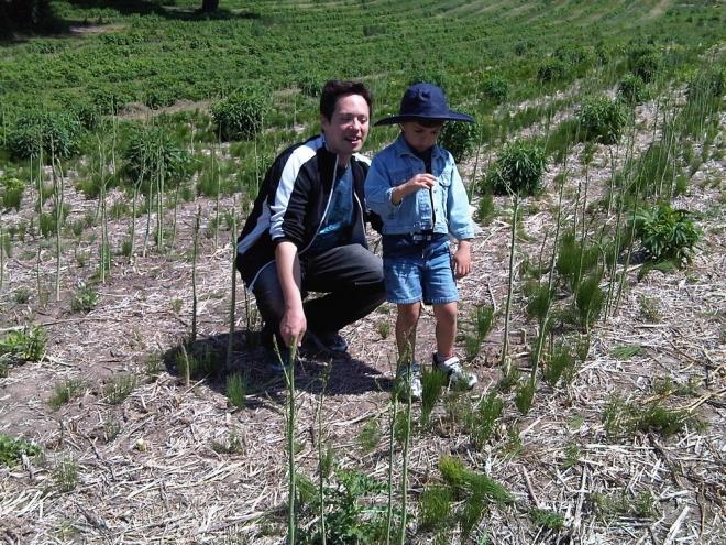 2010-06-01_asparagus_3_0_(1).jpg