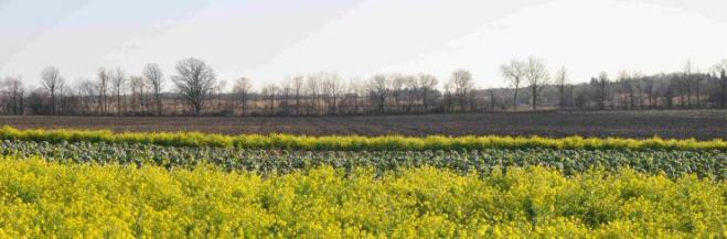 2010-04-08_markham-vegetable-farm.jpg
