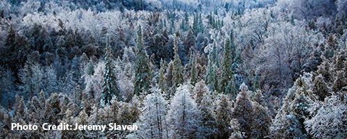 Jeremy-Slaven---Forest.png