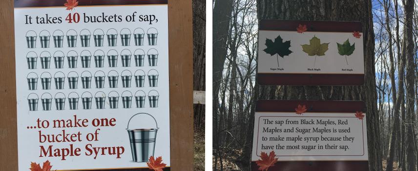 Maple-Info.jpg