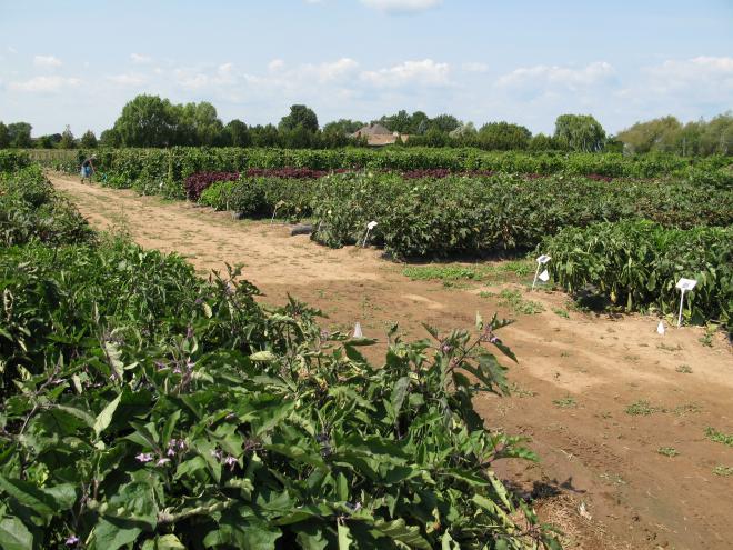 commercialization-world-crops-ontarios-greenbelt.jpg