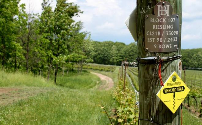 beamsville-bench-winery-trail.jpg