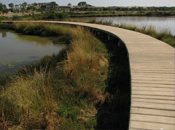 Boardwalk in constructed wetland