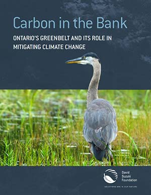 Carbon-Bank-ReportCover