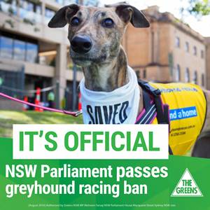 Greyhound racing industry banned in NSW
