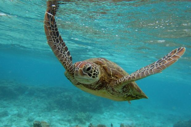 Turtle_source_unknown.jpg