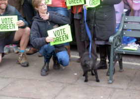Even dogs vote Green in Wallingford