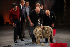 Yes we got Kevin O'Leary to shear a sheep. Awesome!
