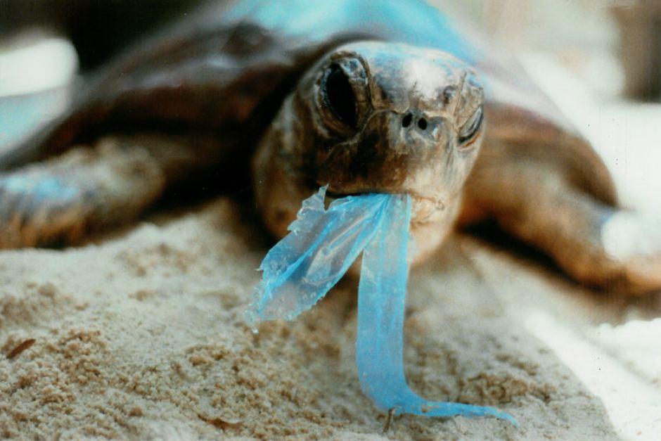 Turtle_Plastic_(credit_dep.state.fl.us).jpg