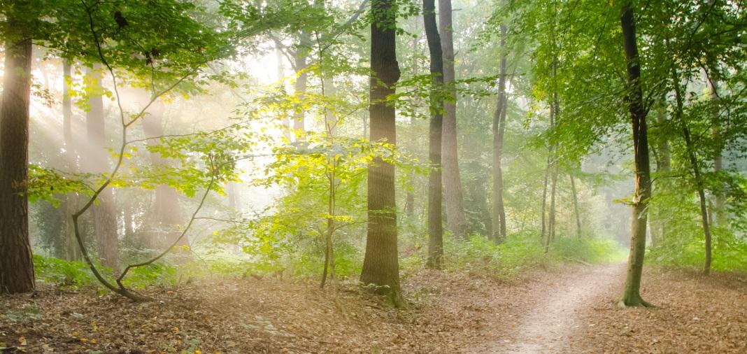 <h2>Biodiversiteit & Natuur</h2><div>Laten we samen meer zorg dragen voor onze biodiversiteit en natuur in Vlaanderen.</div>