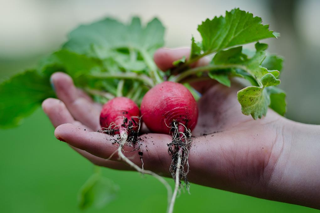 <h2>GEZONDE LANDBOUW</h2><div>Eten doen we allemaal. Liefst lekker en graag gezond. We maken werk van betaalbaar voedsel dat gezond is voor mens en milieu, met een eerlijke prijs voor landbouwers.</div>
