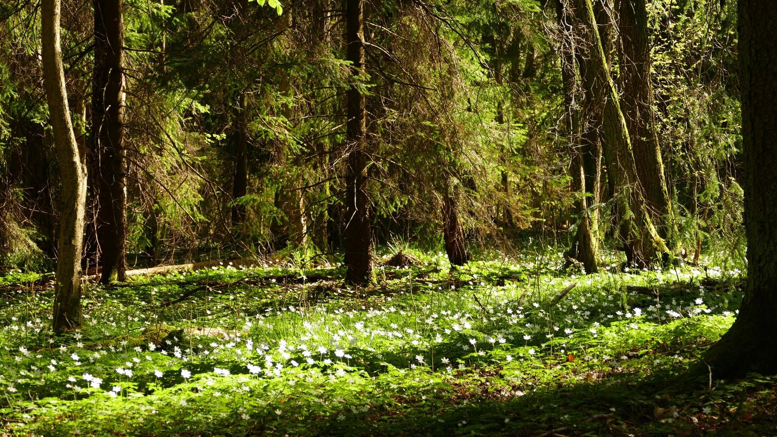 <h2>Bossen</h2><div>Vlaanderen is de meest natuurarme regio van Europa. Bestaande natuur en bossen verdienen de hoogste bescherming. In het Vlaams parlement vecht Elisabeth voor het onmiddellijk stoppen met kappen van waardevolle bossen.</div>