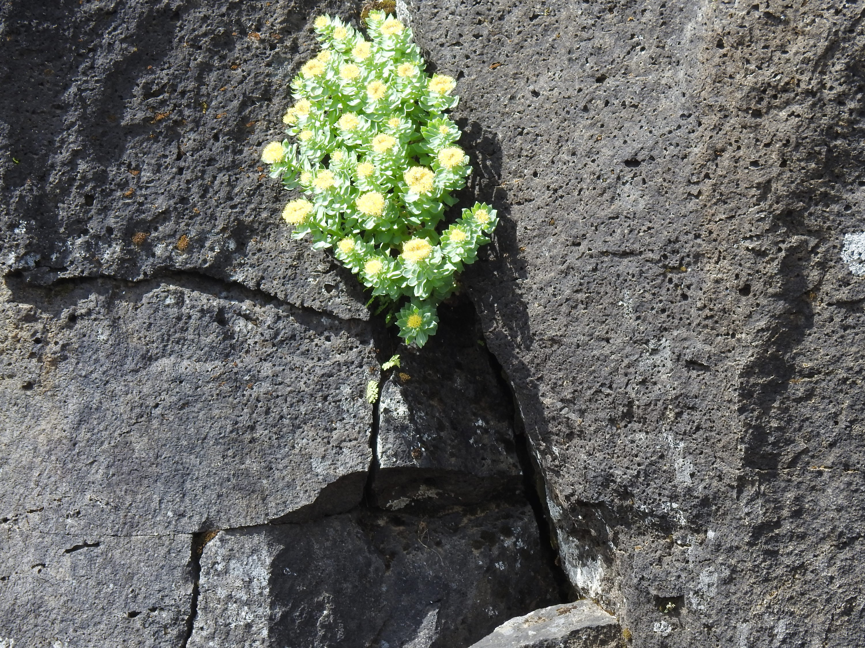 Bloemen op rots