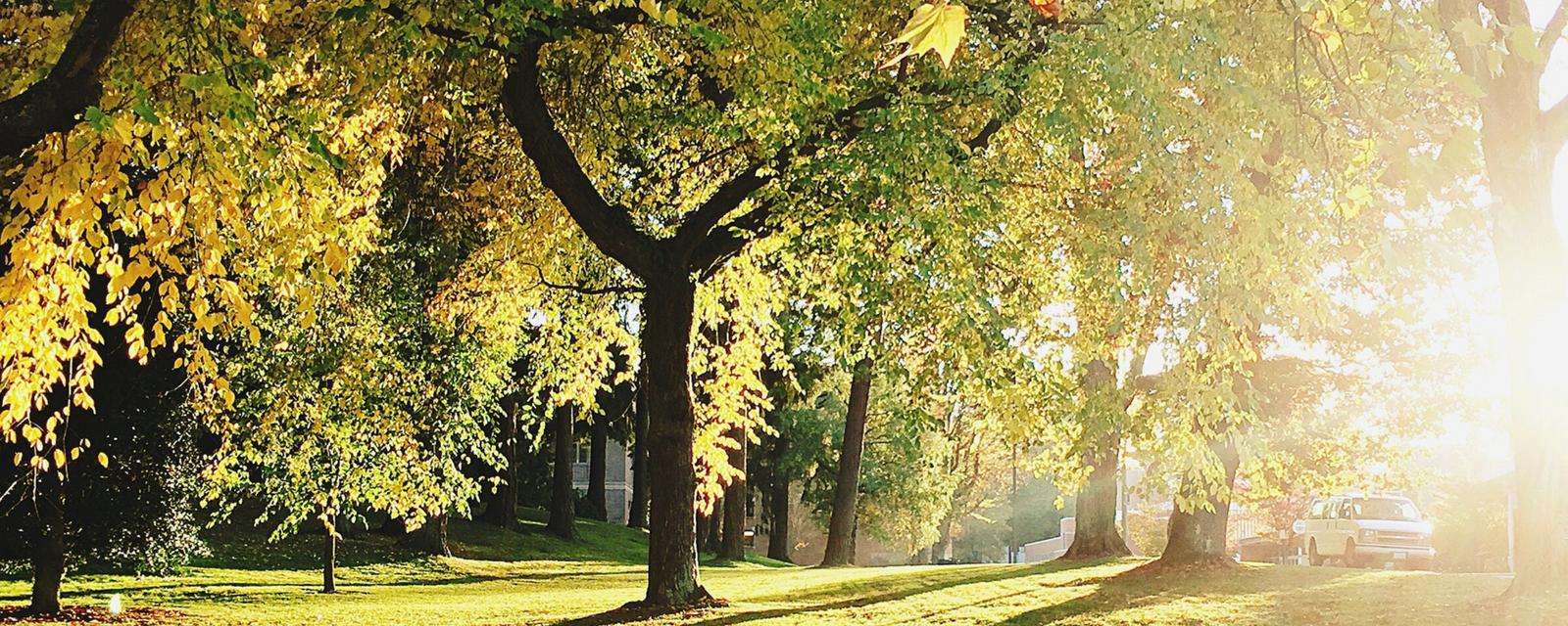 <h2>Groene Ruimte</h2><div>We willen de groene ruimte terug naar de centra van onze drie deelgemeenten brengen. Het doel is om in elke wijk een park te realiseren zodat elk kind kan opgroeien met de natuur om de hoek.</div>