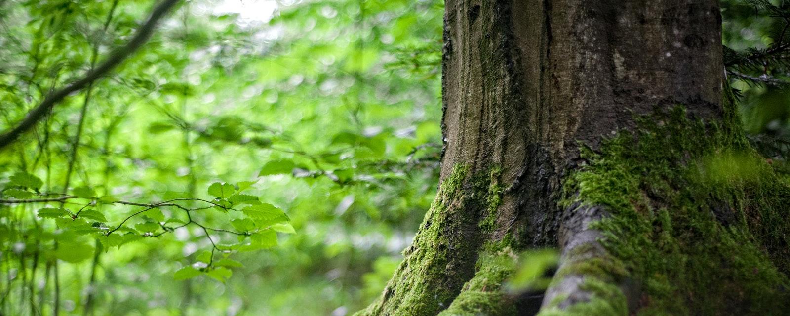 <h2>Natuur</h2><div>Meer en betere natuur. Zo bestrijden we klimaatopwarming en houden we onze lucht, ons water en onze bodem gezond.</div>