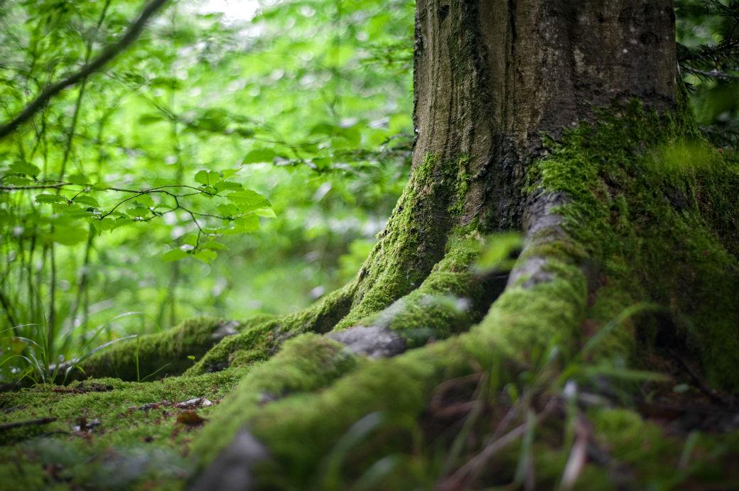 <h2>Natuur, milieu en klimaat</h2><div>Verbeter de wereld, begin bij je stad!</div>