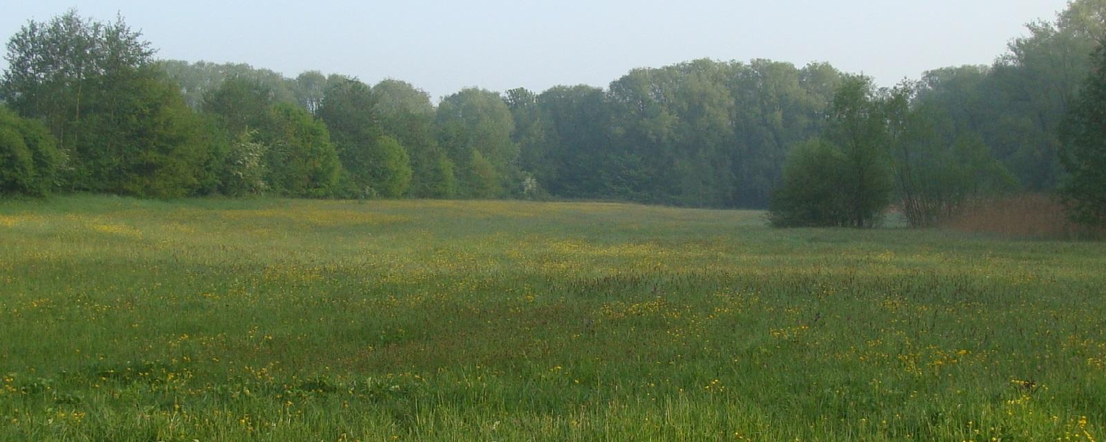 <h2>Groener</h2><div>Groen maakt gelukkig. We beschermen de natuur, behouden onze kostbare open ruimte en zorgen ervoor dat elke inwoner toegankelijk groen op wandelafstand heeft. Zo maken we Dilbeek groener.</div>