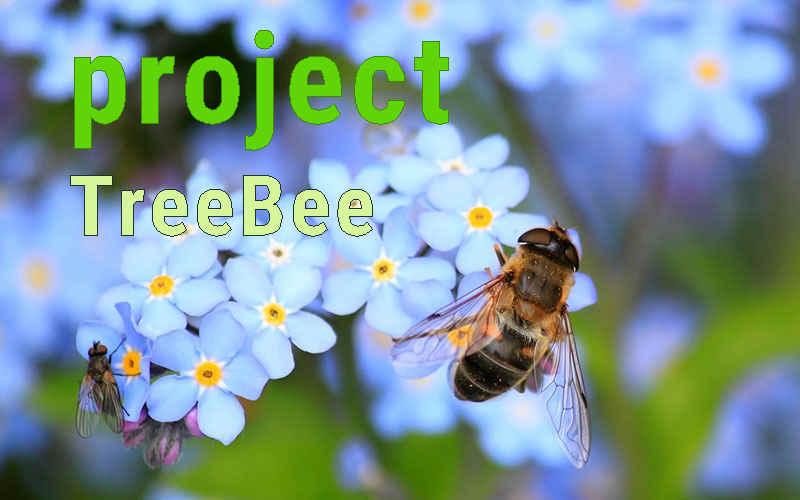 PROJECT_TreeBee_Foto.jpg