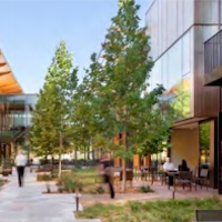 Tree-lined paths wander between office buildings in Mountain View's re-imagined North Bayshore neighborhood