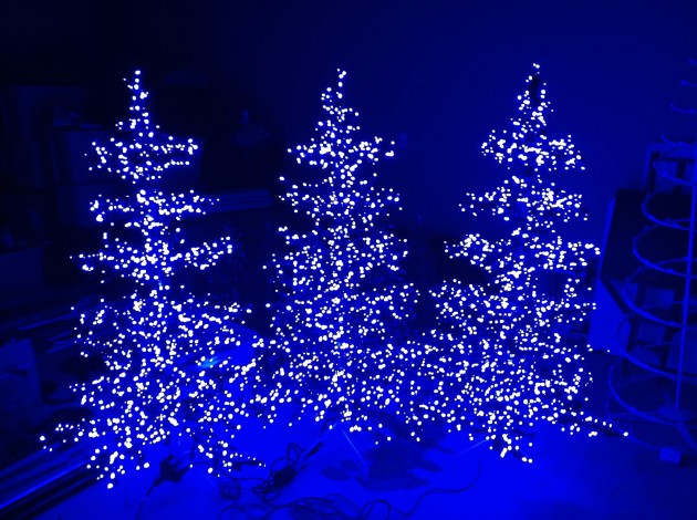 xmas_trees.JPG